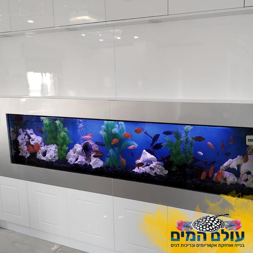 בניית אקווריום 1 1024x1024 - עולם המים בהנהלת משה כהן