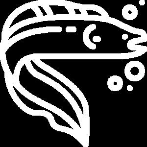 fish 1 300x300 - בנייה ואחזקת אקווריום